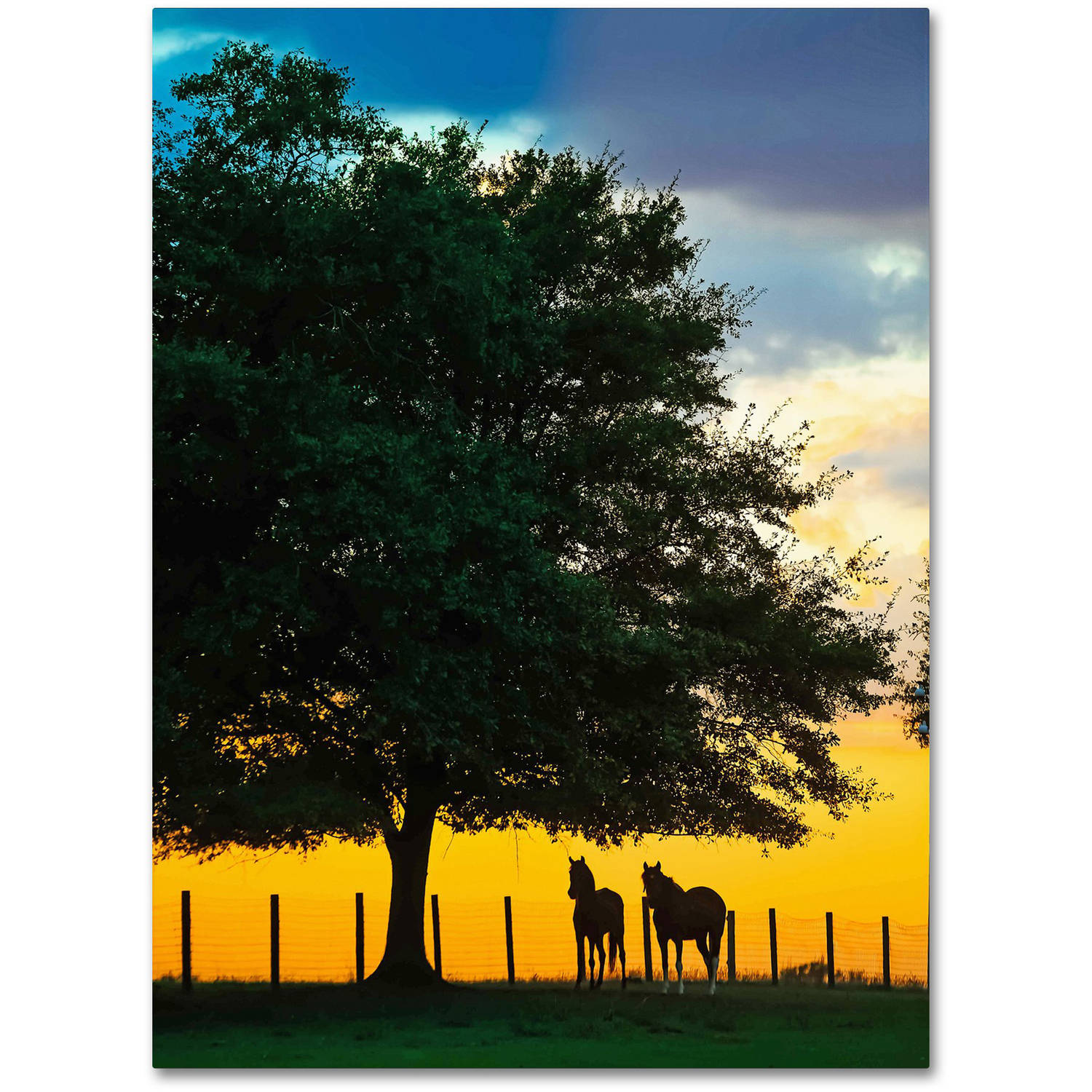 "Trademark Fine Art ""Horse Sunset"" Canvas Art by Preston"