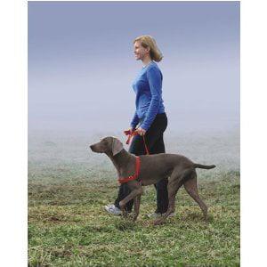 Premier Easy Walk Dog Harness, Small/Medium, Royal Blue Multi-Colored