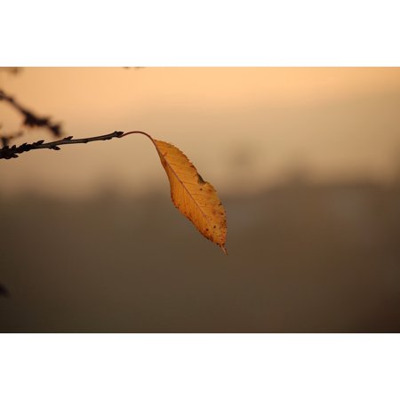 LAMINATED POSTER Autumn Leaf Single Branch Poster Print 24 x 36