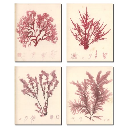 Poster Set Plant (Lovely Vintage Red Botanical Plant Set; Four 8x10in Poster Prints. Red/Cream)