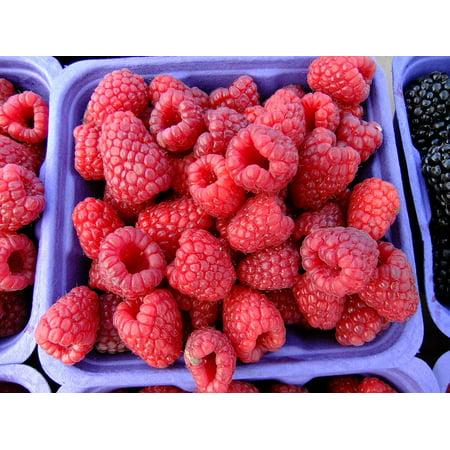 LAMINATED POSTER Berry Raspberries Sweet Market Fruit Fresh Poster Print 24 x 36
