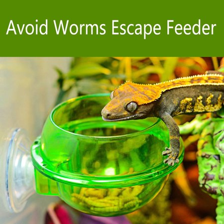 Anti-escape Food Bowl Worm Live Fodder Container for Pet Lizard Chameleon