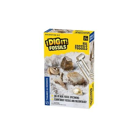 I Dig It! Fossils - Real Fossils Excavation Kit (I Dig)