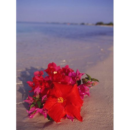 Hibiscus and Bouganvilla on Beach, Cayman Islands Print Wall Art By Anne Flinn Powell
