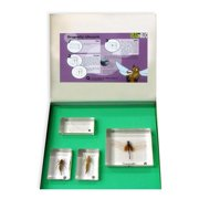 Ed Speldy East BFK1101 Biology for Kids - Dragonfly Lifecycle