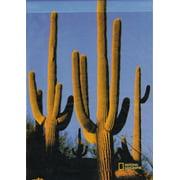 "Saguaro Cactus Decorative Large House Flag 28"" x 40"""