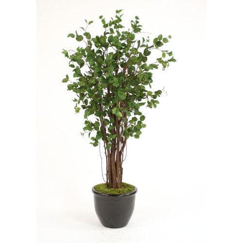 Distinctive Designs Elm Tree in Planter