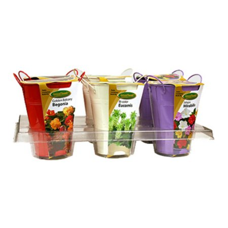 Green Thumb 07813 Metal Pot Flower Bulb Kit Shipper, 6 Pieces