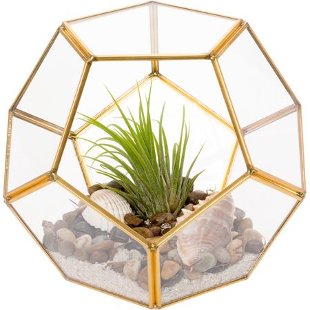 Mindful Design Geometric Dodecahedron Desktop Garden Planter Glass
