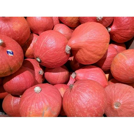 Framed Art For Your Wall Decorative Squashes Autumn Pumpkin Halloween Gourd 10x13 - Pumpkin Squash For Halloween