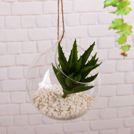 Brand New Wall hanging Vase for hydroponics Plants goldfish bowl vase Styled Decor - image 7 de 7
