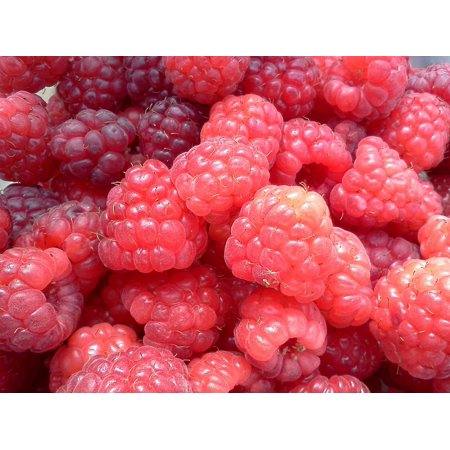 Canvas Print Healthy Fresh Sweet Raspberries Fruit Food Red Stretched Canvas 10 x 14