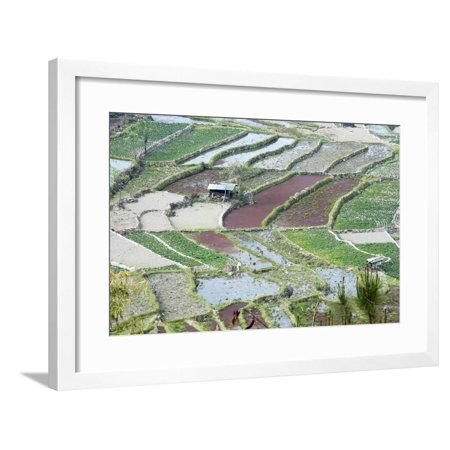 Mixed Paddy Fields Growing Vegetables under Highly Efficient Jhum System of Slash and Burn, India Framed Print Wall Art By Annie Owen