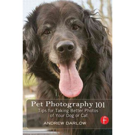 Pet Photography 101: Tips for Taking Better Photos of Your Cat or Dog