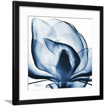 Magnolia Indigo Framed Print Wall Art By Albert Koetsier