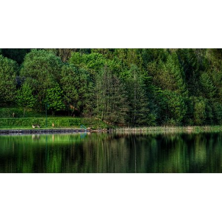 canvas print lake meadow forest pond water nature bank tree stretched canvas 10 x