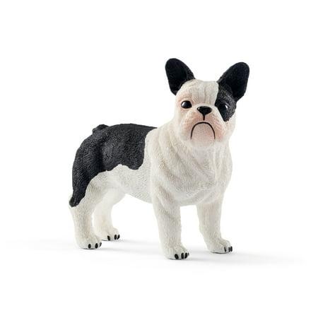 (French Bulldog)