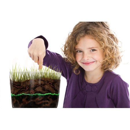 Complete Worm Farm Observation Kit for Kids with 20 LIVE Worms SENT NOW - Live Butterfly Kit