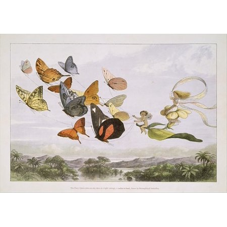 """The Fairy Queen Takes an Airy Drive in a Light Carriage a Twelve-in-hand drawn by Thoroughbred Butterflies Poster Print by Richard Doyle (British London 1824  """"1883 London) (18 x 24) (Butterfly Carriage)"""