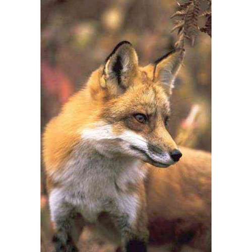Fox Lined Journal