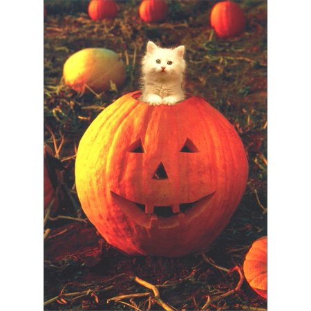 Avanti Press White Kitten in Pumpkin Cat Halloween - Kitteh Halloween