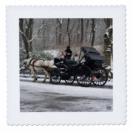 Central Park Snow (3dRose Snow blizzard in Central Park Manhattan New York City - Quilt Square, 10 by 10-inch )