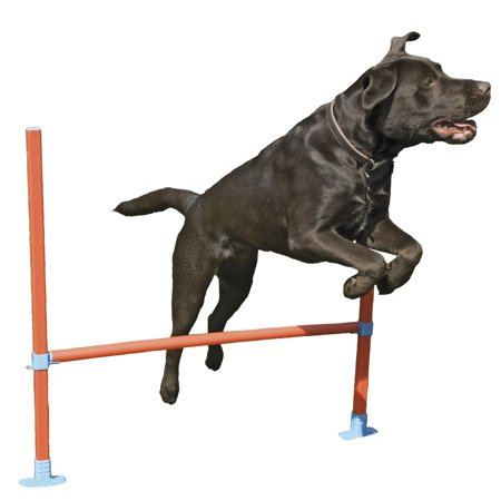 Rosewood Toy (Rosewood Pet Agility Hurdle Small Dog Training)