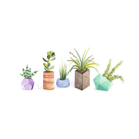 Succulent Display I Print Wall Art By Rebekah