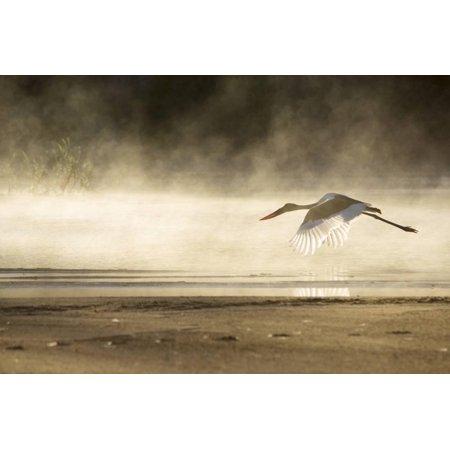- Saddle Billed Stork Print Wall Art By Michele Westmorland