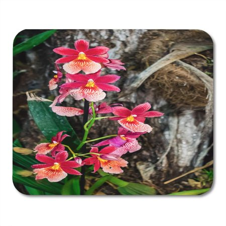 KDAGR Colorful Cambria Burregeara Nelly Islery Orchid Oncidium Hybrid Jungle Mousepad Mouse Pad Mouse Mat 9x10 inch