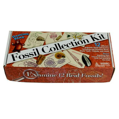FOSSIL COLLECTION KIT (12 pc): Trilobite, Dinosaur Bone, Sharks teeth, Coprolite (fossilized Turtle Poop) & more! Geological Time Scale, Magnifying Glass, Educational Science Set, Dancing Bear Brand