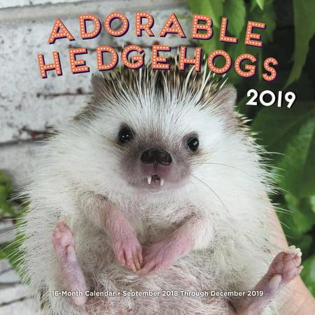 Adorable Hedgehogs 2019: 16-Month Calendar - September 2018 Through December 2019 (Other)