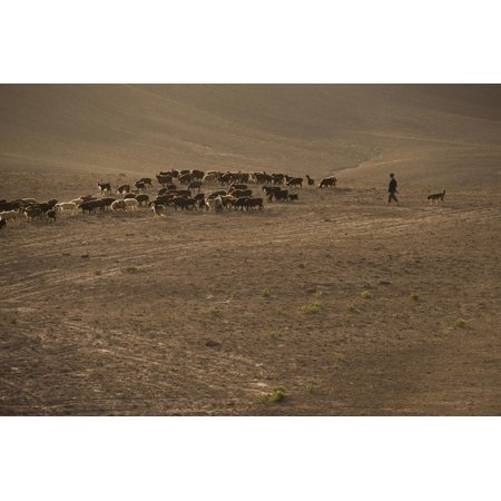 Shepherds and their flocks walk long distances in barren hills, Afghanistan Print Wall Art By Alex