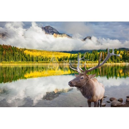 Jasper National Park in the Rocky Mountains of Canada. Proud Deer Antlered Stands on the Banks of T Print Wall Art By kavram