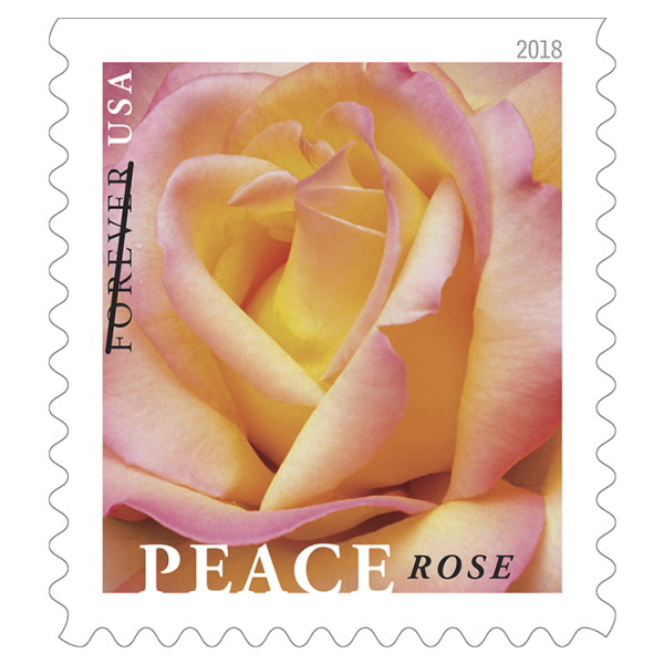 USPS Peace Rose Forever Stamp - Twenty First-Class Forever Stamps
