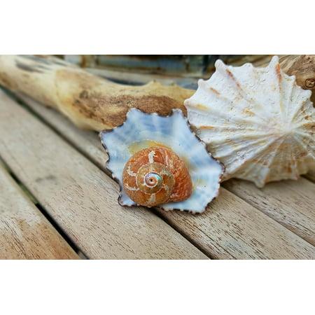 Indoor Decorative Housing (LAMINATED POSTER Snail Housing Snail Shell Shell Decorative Spiral Poster Print 24 x 36)