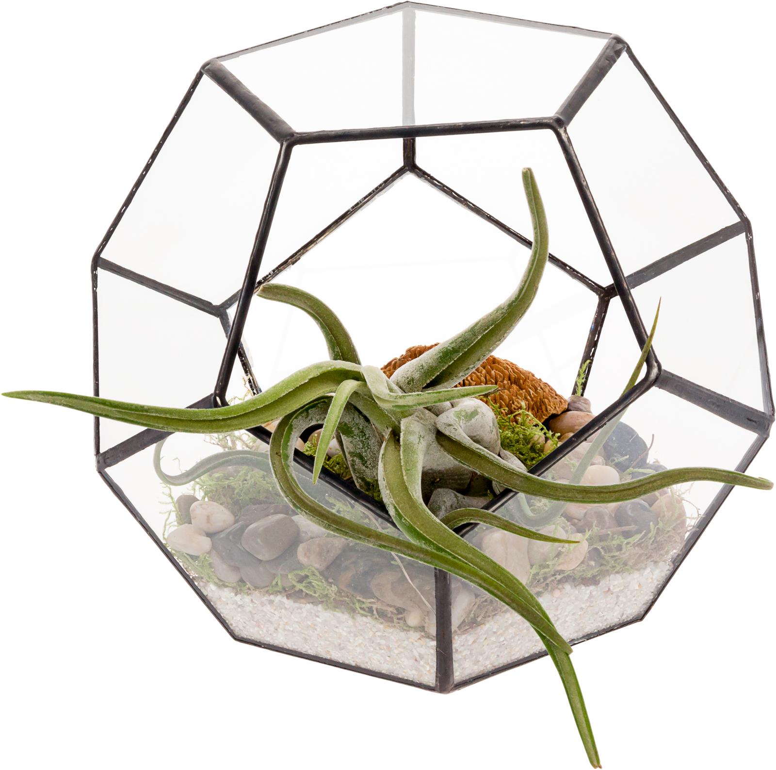 Mindful Design Geometric Dodecahedron Desktop Garden Planter Glass Terrarium