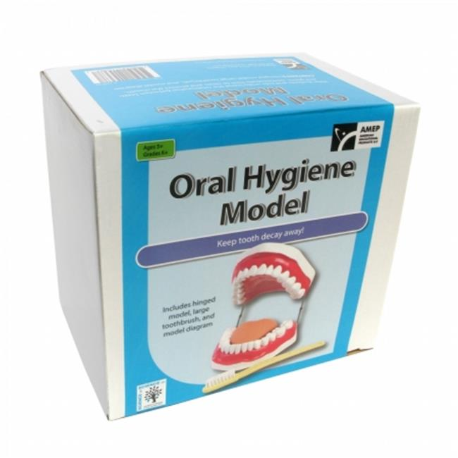 American Educational Products 7-1420-RT Oral Hygiene Model