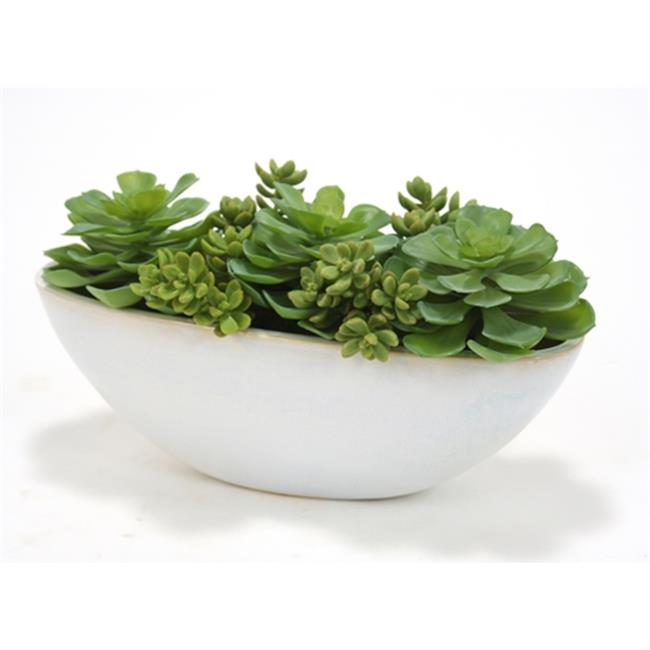 Distinctive Designs International 2998 Succulents & Hen-n-Chickens in White Oval Ceramic Planter