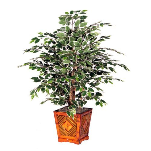 4 ft. Variegated Extra Full Tree / Square Wood