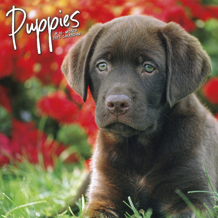 2019 Puppies Mini Calendar