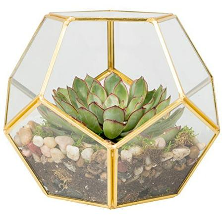 Deco Sphere Glass Terrarium Container, Succulent & Air Plant](Geo Terrarium)
