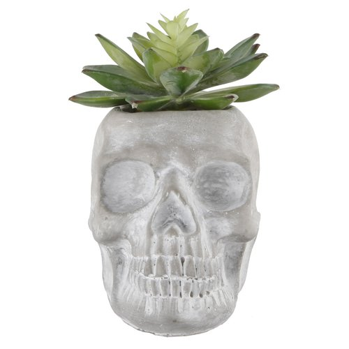 The Holiday Aisle Desktop Succulent Plant in Cement Sugar Skull Pot