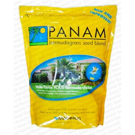 PanAm Bermuda Grass Seed Blend - 25 lbs