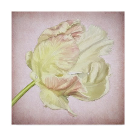 3 Arm Tulip - Trademark Fine Art 'Pink Parrot Tulip Painting Iii' Canvas Art by Cora Niele