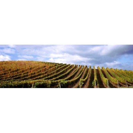 Vineyard Napa Valley California USA Canvas Art - Panoramic Images (18 x 6) - Usa Nap