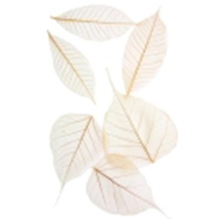Arnold Grummer 3 - 4 in. Semi-Transparent Assorted Fossilized Leaf, Pack 48