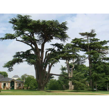 Peel-n-Stick Poster of Castle Trees France Poster 24x16 Adhesive Sticker Poster Print