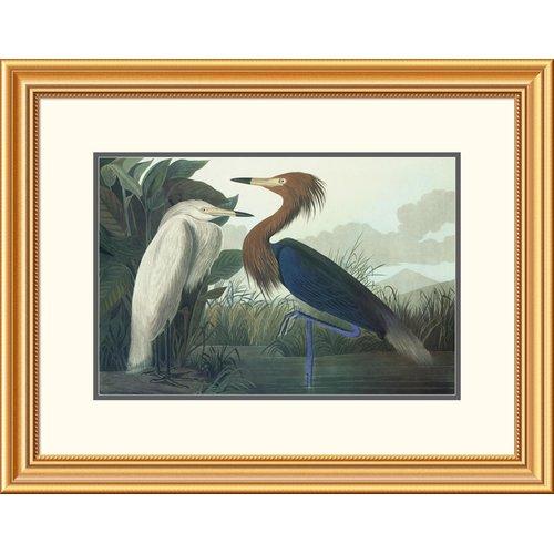 Global Gallery Purple Heron by John James Audubon Framed Painting Print