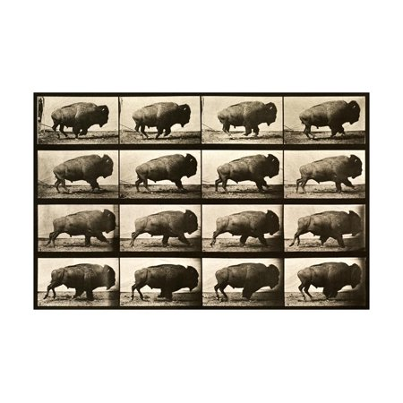 Buffalo Running, Animal Locomotion Plate 700 Print Wall Art